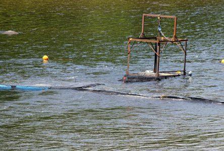 Un barrage temporaire pour capturer le saumon