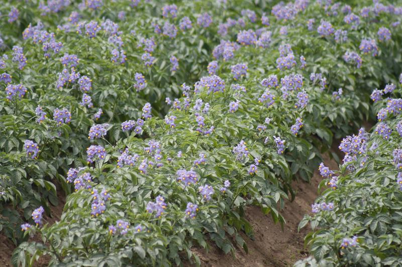 L'année 2016 a été bonne pour les récoltes dans Portneuf