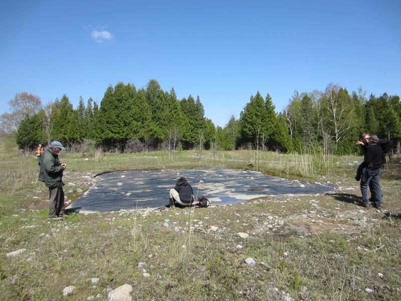 Deux projets de lutte aux espèces envahissantes dans Portneuf
