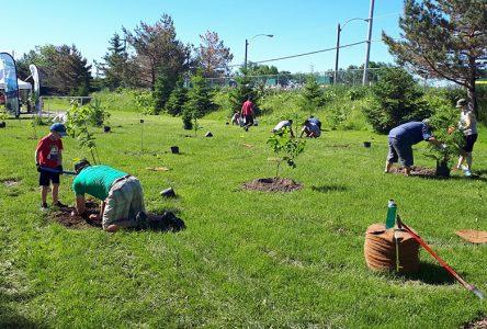 Donnacona plante 450 arbres dans un parc