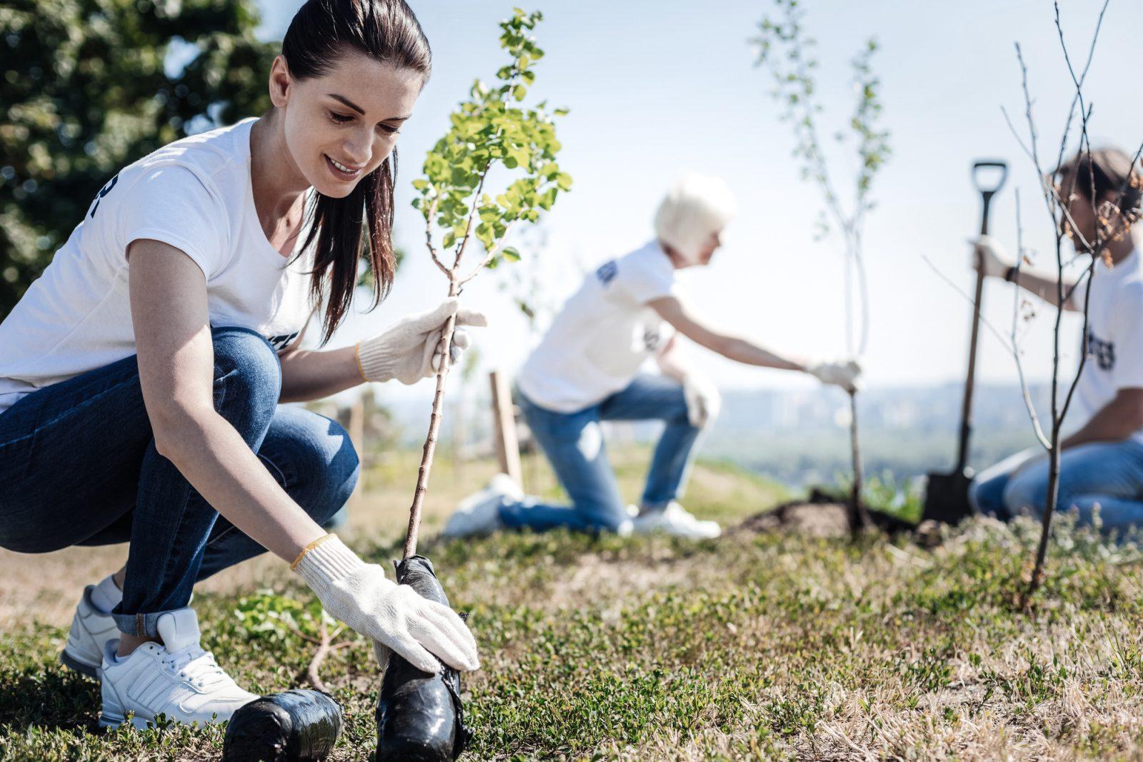 L'importance de prendre soin de vos arbres
