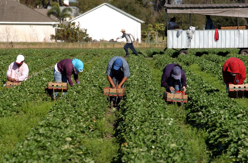 Aide pour les travailleurs étrangers et leurs employeurs
