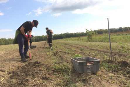 Vider les champs… pour combler des besoins