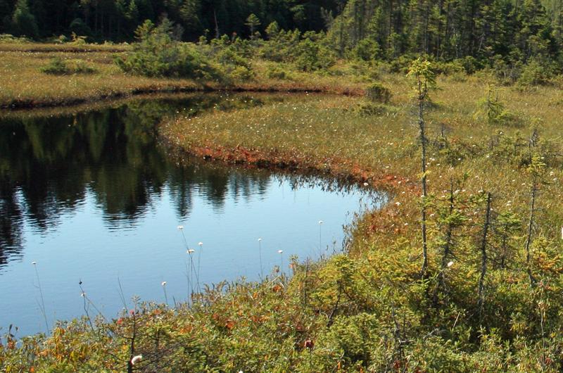 Un plan pour protéger lacs et marais
